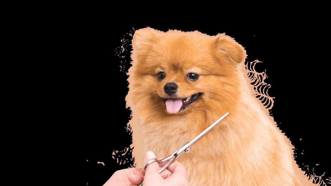 Ветеринарная клиника — необходимость для вашего питомца