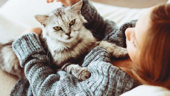 Только научные причины завести кота