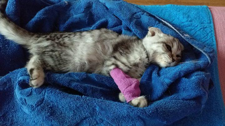 В ожидании котят: заботимся о своей кошке
