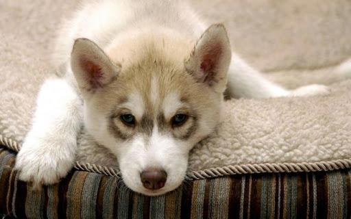 Что нужно купить прежде чем завести собаку